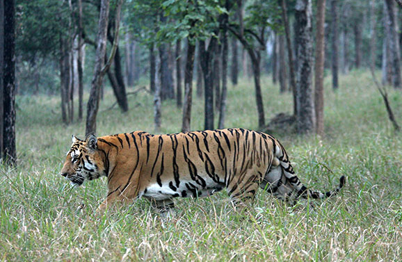 Manas_Sanctuary&Tiger_Reserve