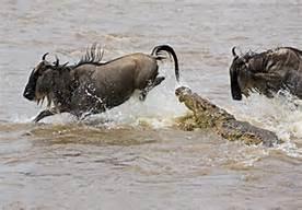 mara crocs